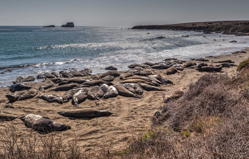 Elephant Seal Vista Point