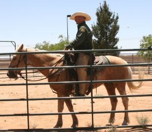 """""""Tony"""" with Senior Border Patrol Agent Bobby Traweek. Tony is a 4 year old buckskin gelding from the Wyoming White Mountain herd management area. This picture was taken at the Santa Teresa Border Patrol Station  in Santa Teresa, NM - El Paso sector."""