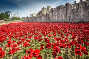 Tower of London - poppies - Facebook