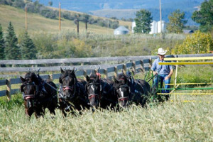 Horse-ride_optimized