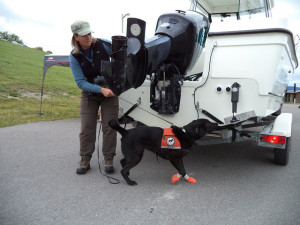 Dog sniffer - boat inspections