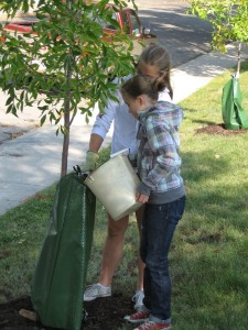 Planting a tree in Highland Park