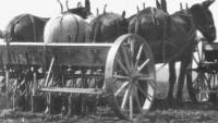 Horses Farming History