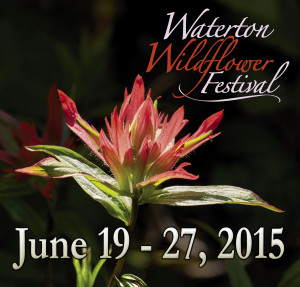 Wildflower Festival compact