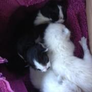 kittens-180x180