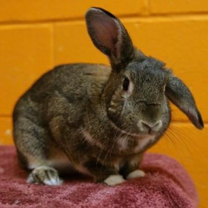 Fudge the bunny asks if you have room in your life for him!