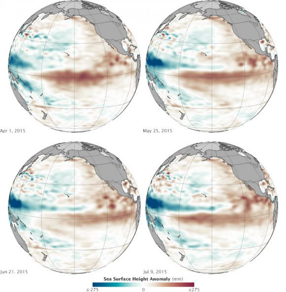 These maps show NASA's view of Pacific Ocean sea surface height anomalies at four different moments since March 2015. Shades of red indicate where the ocean stood above normal sea level because warmer water expands to fill more volume (thermal expansion). Shades of blue show where sea level and temperatures were lower than average (thermal contraction). Normal sea-level conditions appear in white. Image credit: NASA