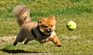 Dog-playing-with-ball-Flickr-325x195