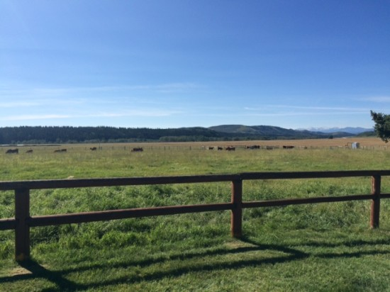 It was a beautiful day for a visit to the OH Ranch