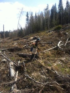 tree planting AFPA volunteer