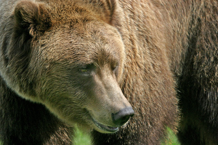 Bear Photo Courtesy of Derek Reich