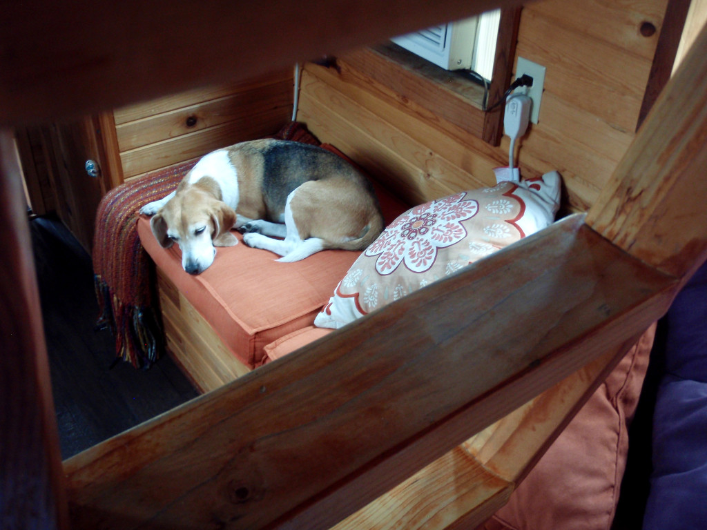 PORTLAND, OR SEPTEMBER 2015-The author's beagle found a little spot of his own in their 120-square-foot tiny house at Caravan, called Rosebud. The human sleeping area was up the ladder in the loft. ( Photo by Melanie D.G. Kaplan)