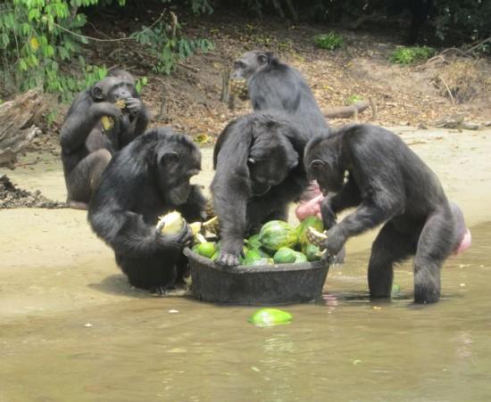 Photo: Liberiana