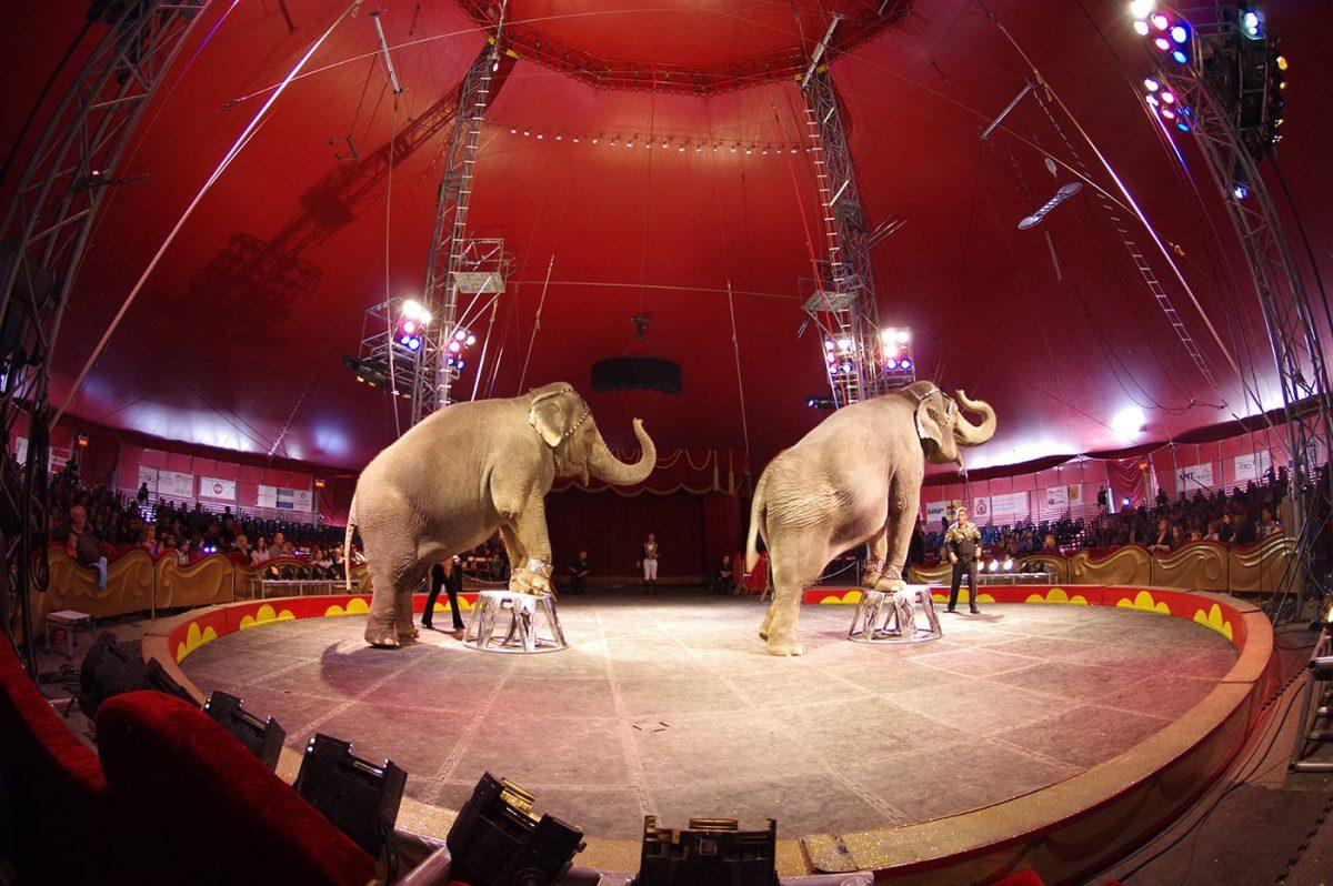 Marie and Shelly - Royal Cdn Circus