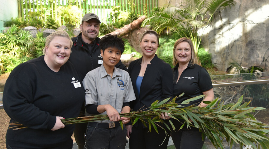 Our Giant Pandas Love Bamboo and We're Thankful WestJet Does Too!