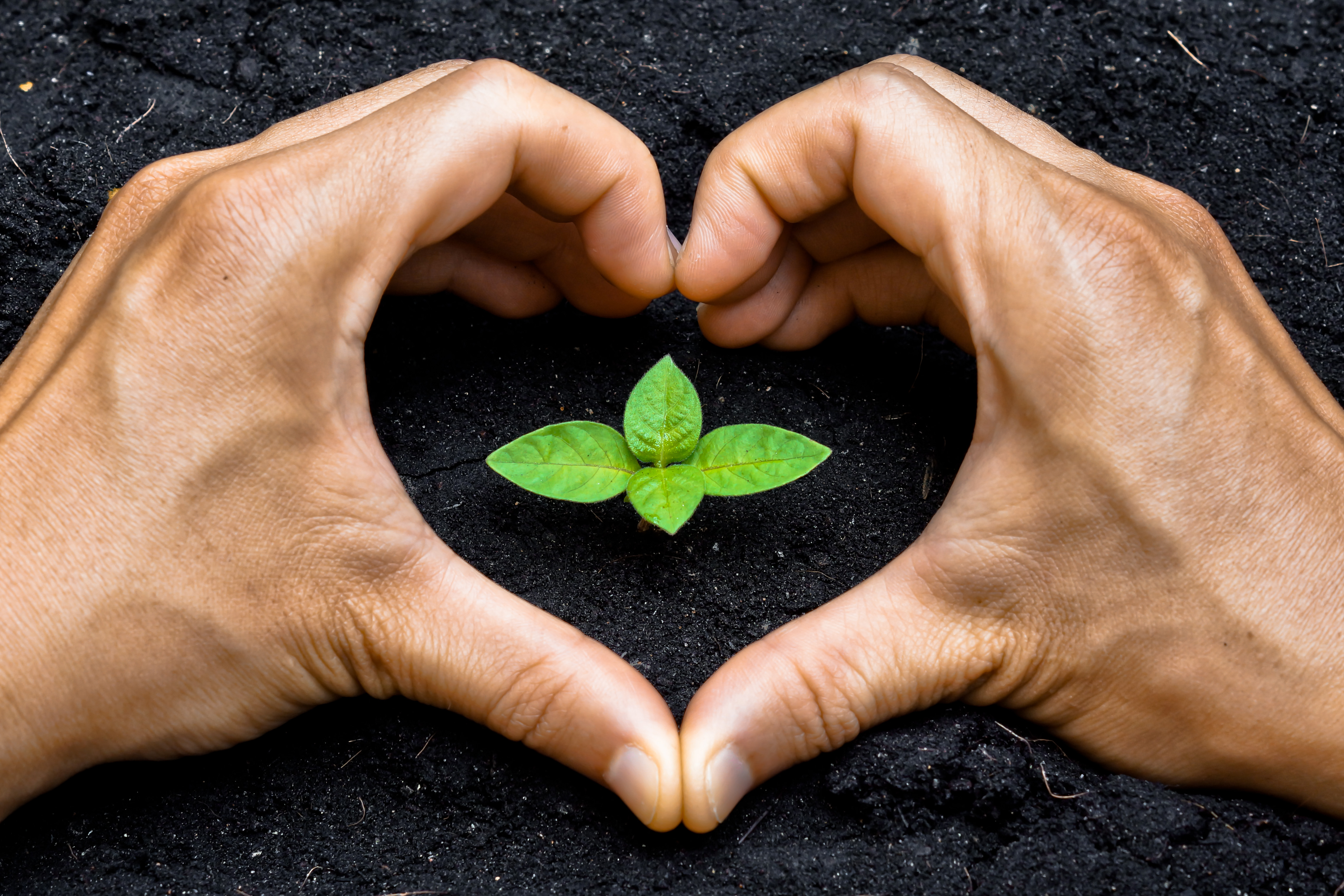 Hands in the shape of a heart around sprout