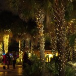 Riverbanks Zoo Lights Before Christmas