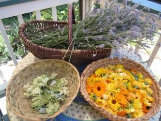 Herbal harvests
