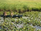 Klamath Tribe- Harvesting wocas