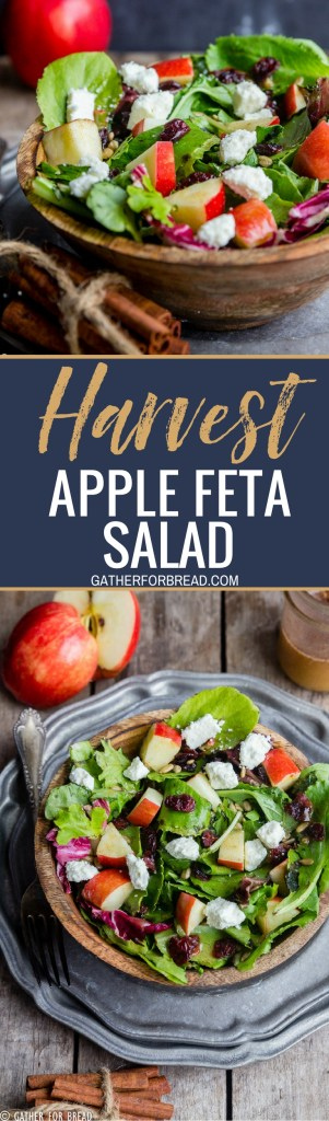 Harvest Apple Feta Salad - Delicious fall salad, greens with chopped apple, Feta cheese, cranberries and a sweet Maple cinnamon vinaigretterecipe made with apple cider vinegar.