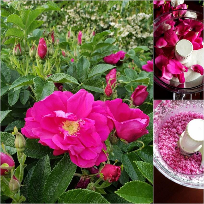 rose18-001