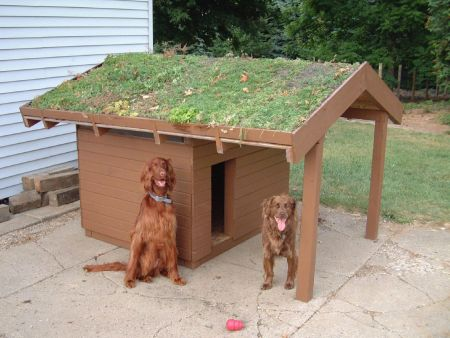DoghouseGreenRoof