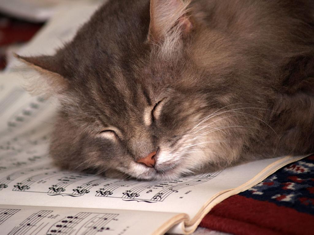 Sete coisas que fazem sentido para o seu gato… mas não para você