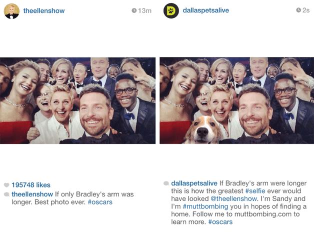theellenshow: Se pelo menos o braço do Bradley fosse mais longo... Melhor foto de todas. #oscars dallaspetsalive: Se o braço do Bradley fosse mais longo, a melhor #selfie de todas seria assim, @theellenshow. Eu sou Sandy e estou #muttbombing vocês para encontrar uma família. Siga-me em muttbombing.com e saiba mais. #oscars