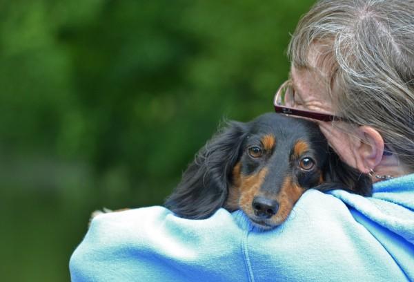 cachorro empatia