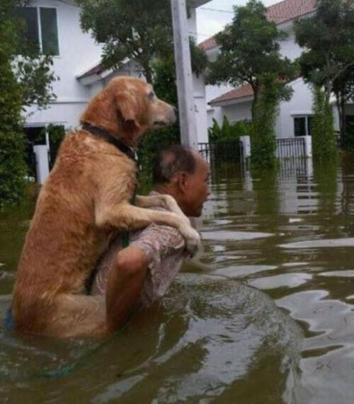 people-doing-amazing-things-for-animals-03179