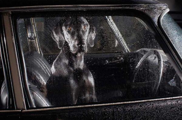 cachorros carros 1