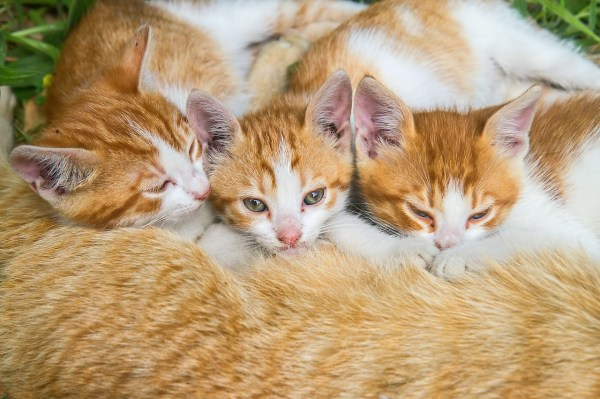gatos istambul 3