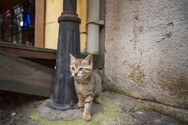 gatos istambul 4