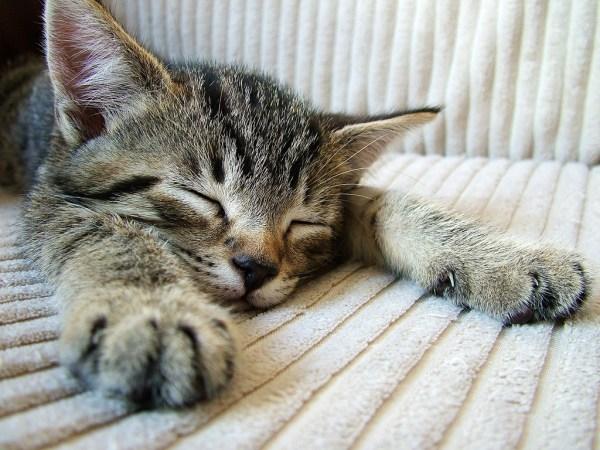 por que gatos dormem tanto