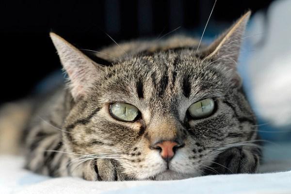 gato correr pelo quarto acordar meio da noite