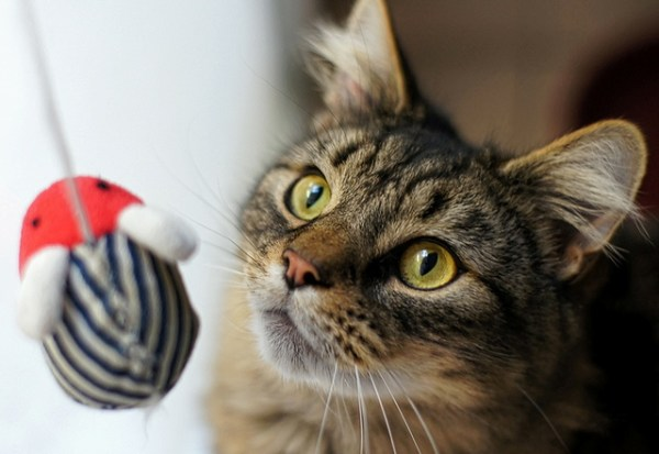 televisao gato