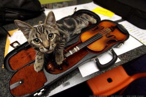 estilo preferido musica gatos