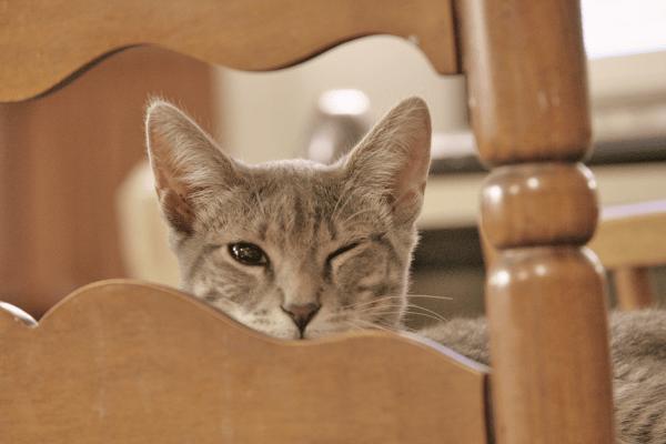 gato-vir-quando-chama