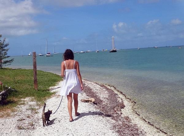 Gata adotada viaja o mundo com seus dois humanos6