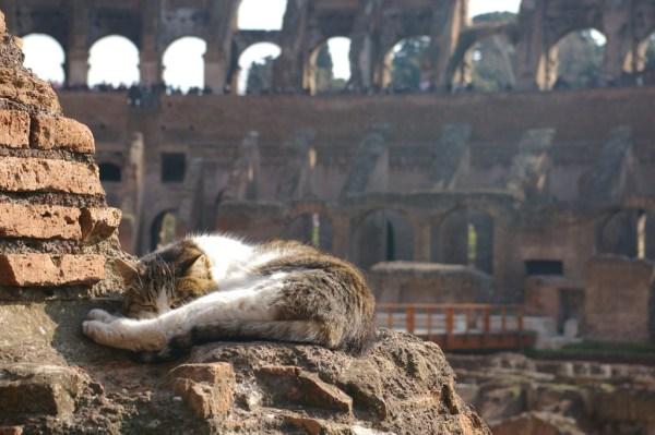Estima-se que só no Coliseu vivam mais de 300 gatos ferais. Foto: Debs-eye https://www.flickr.com/photos/debbcollins/