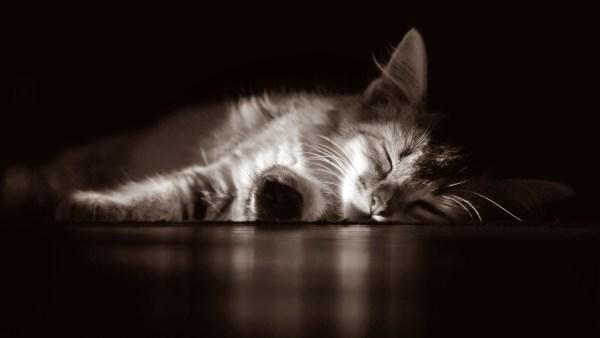 segredos sono gatos