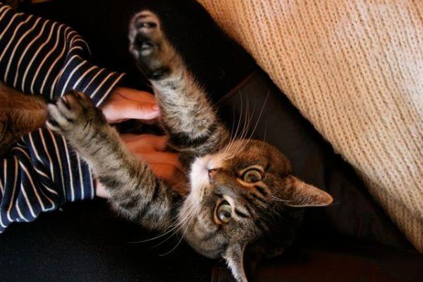 massagem gatos como fazer