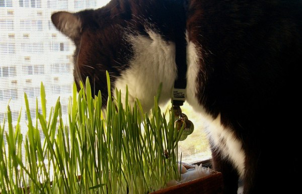 jardim-sensorial-plantas-gatos2