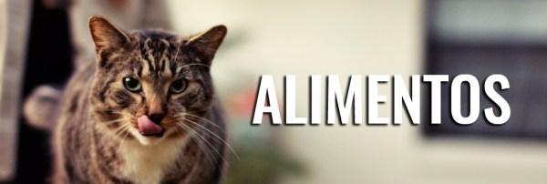 alimentos-toxicos-gatos-comidas-venenosas