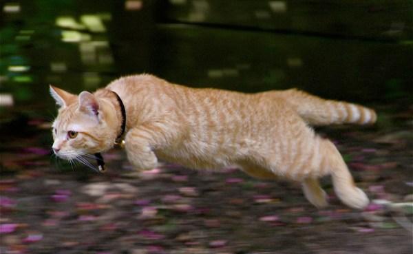 mitos-alimentacao-gatos-cacada