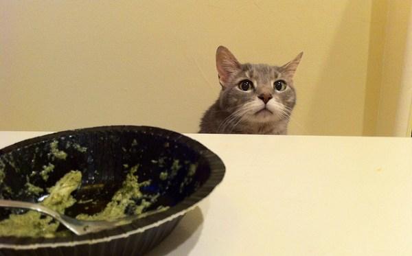 mitos-alimentacao-gatos-comida-de-gente