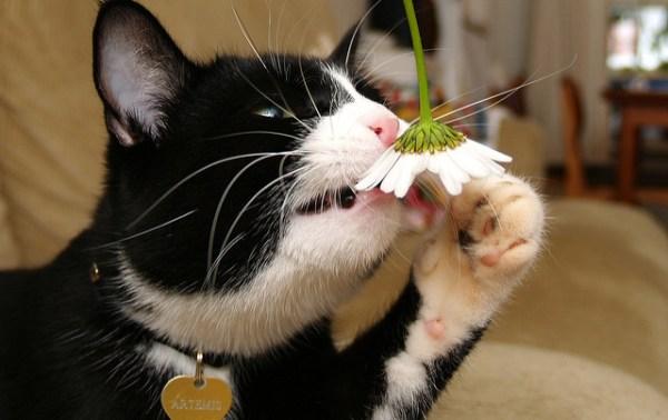 mitos-alimentacao-gatos-sabem-o-que-comer-faz-mal