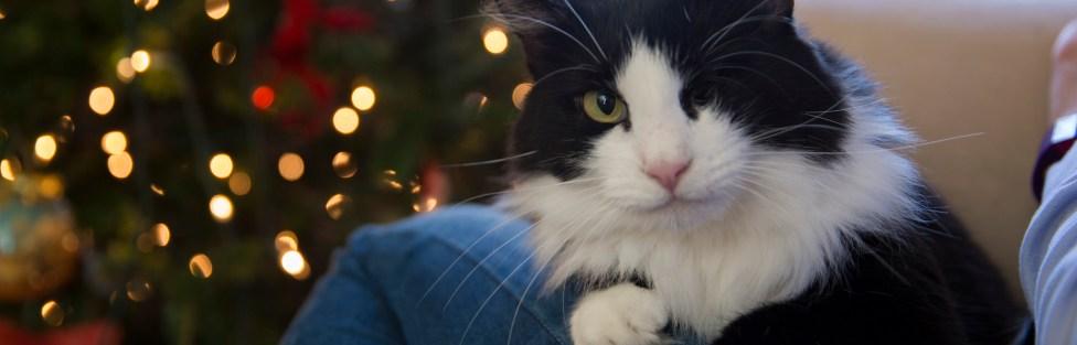 Carta de um gatinho para o Papai Noel – Versão 2016