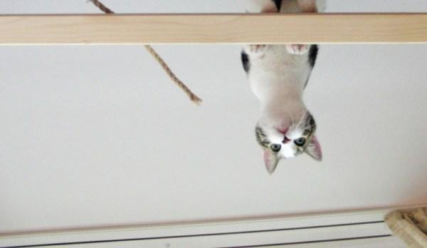 gato-cachorro-conviverem-felizes