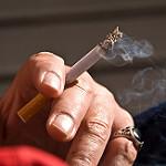 cigarro caes gatos